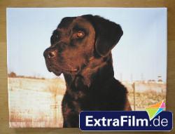 Fotoleinwand von ExtraFilm