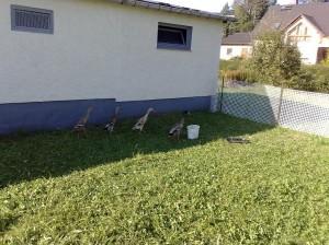 Schnecken-Enten