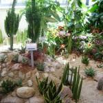 Wüstenpflanzen der Landesgartenschau Reichenbach