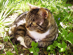 Katze - Zeckenschutz